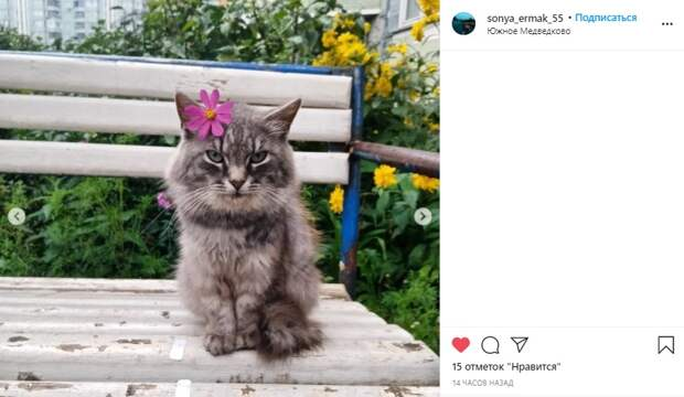 Фото дня: кот в Южном Медведкове полюбил цветы космеи