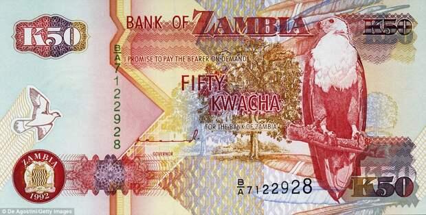 50 замбийских квач