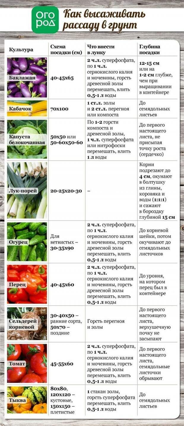 Как высаживать рассаду в грунт