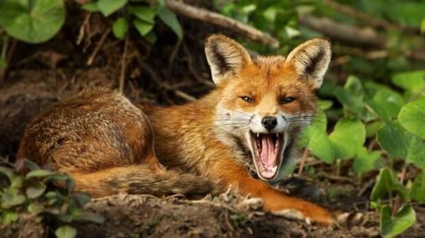 Ученые выяснили, укакого животного самый заразительный смех