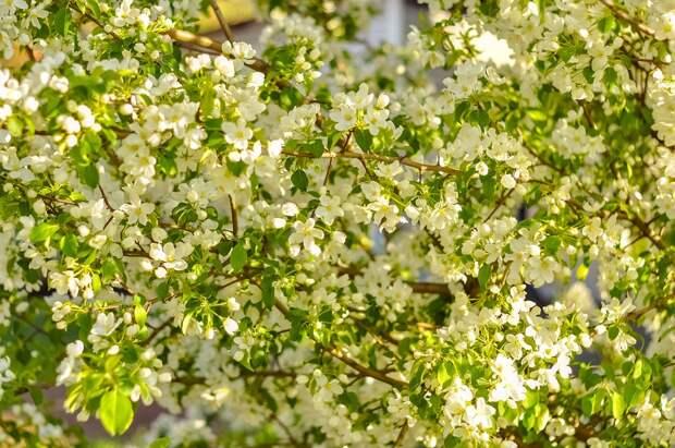 На что может быть аллергия в июне и как с ней бороться