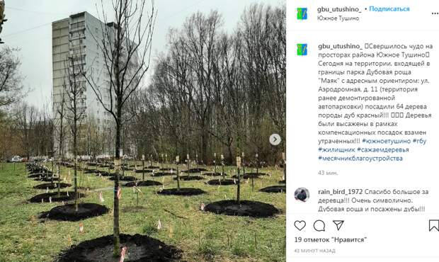 В парке на Аэродромной посадили 64 дуба
