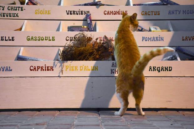 Выбирать всегда сложно Эс-Сувейра, город, животные, кот, марокко, проект, фотограф