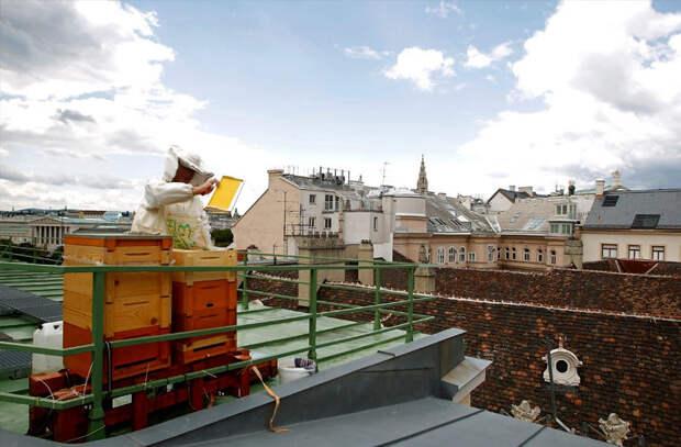 """""""Толерантные"""" светофоры и другие очаровательные странности австрийской столицы"""