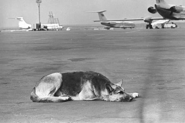 Судьба собаки Пальмы, очень похожа на историю Хатико