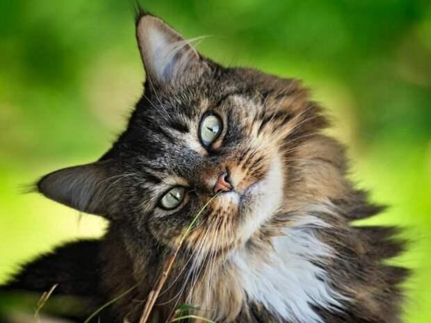 Кот и муж – ментальная связь.