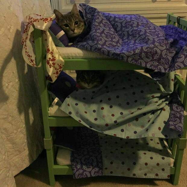 Кроватка для котов