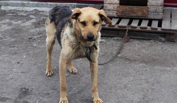 Оренбуржцу грозит до 3 лет лишения свободы за убийство собаки