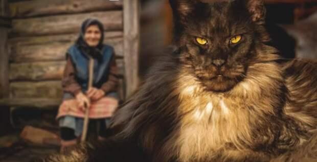 Бабушке отдали старого кота мейн-куна. Но никто не ожидал, что кот сможет помочь старушке излечиться от воспаления легких