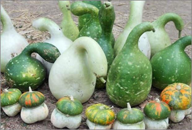 Какие необычные растения можно вырастить у себя в огороде?