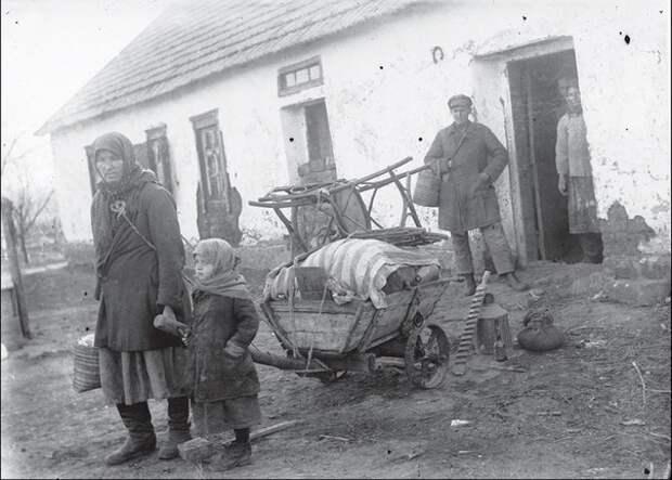 Мышиное нашествие 1932 года в СССР: как оно связано с голодомором