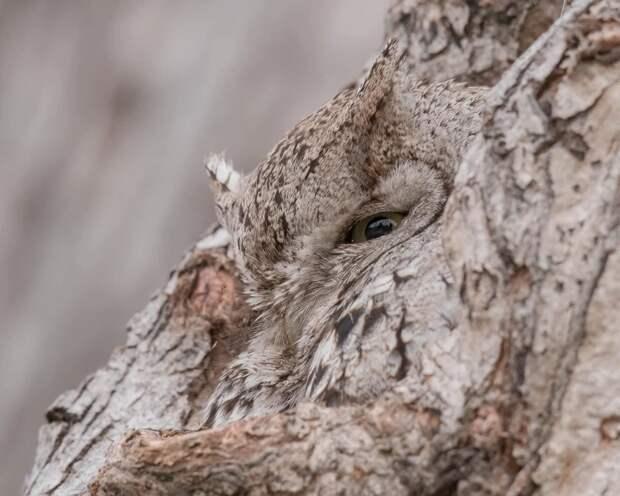 Чудеса маскировки: авысможете найти животных, которые спрятались нафотографиях?