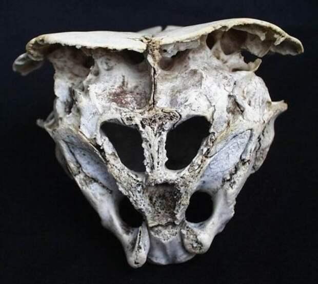 Родопский череп