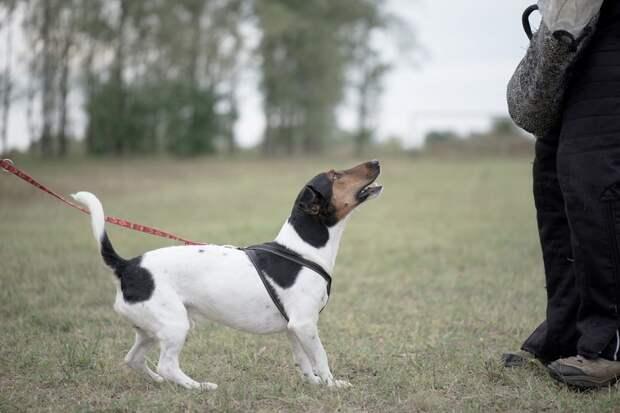 почему собака лает и воет