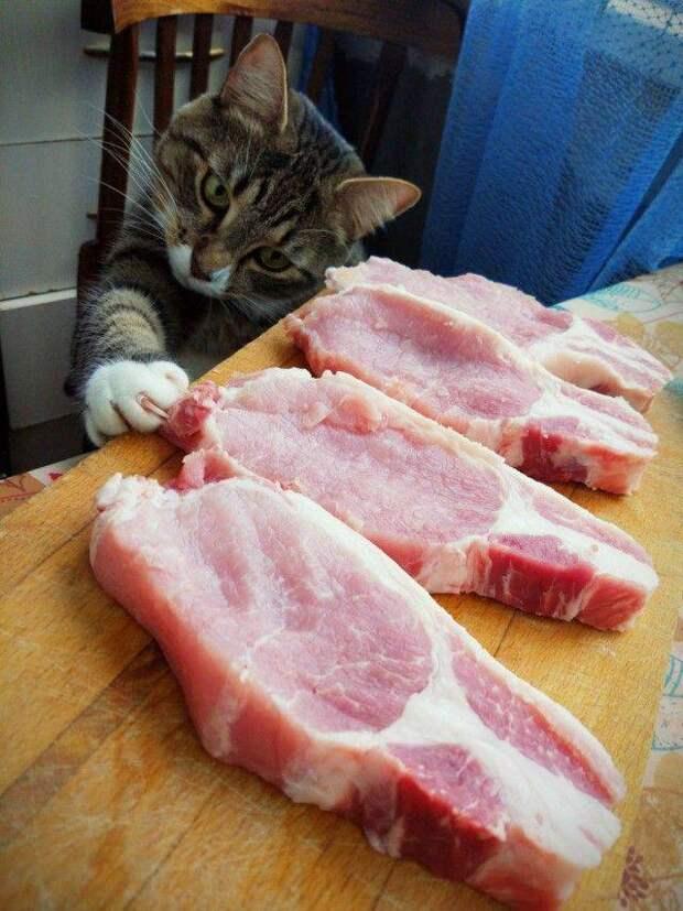 Кот и стейки