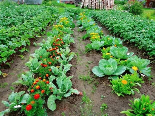 посадка овощей в марте