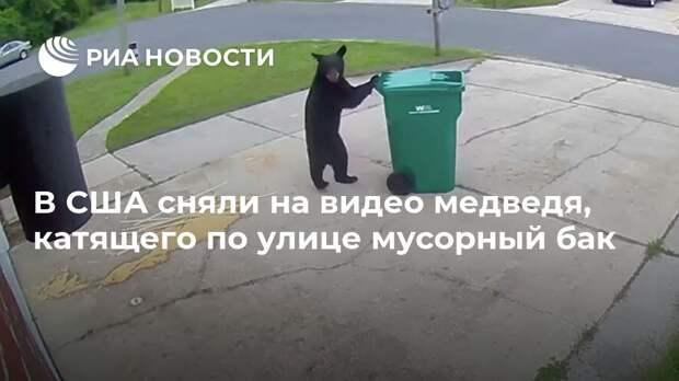 В США сняли на видео медведя, катящего по улице мусорный бак