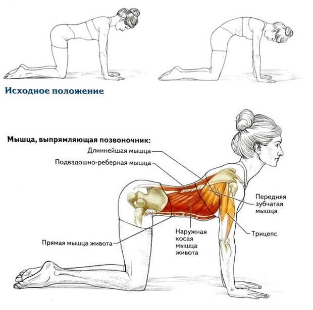 8 упражнений для укрепления спины. Омолаживающие упражнения.
