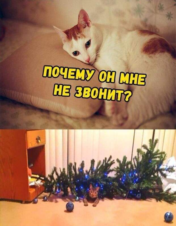 Новогодние приколы в картинках