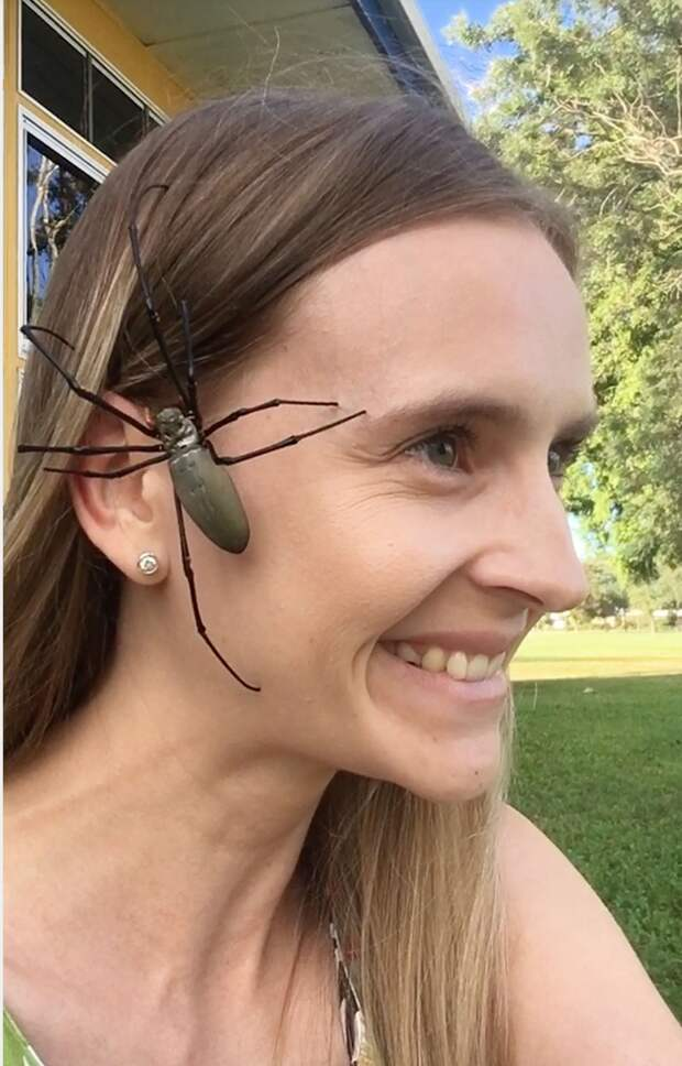 Релакс не для слабонервных: австралийка снимает стресс, разрешая паукам ползать по лицу
