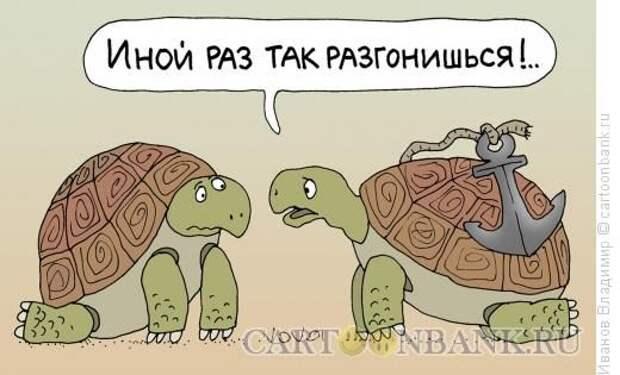 Рассказ любителя черепашек