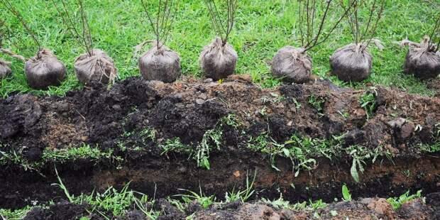 В Коптеве до конца мая пройдет высадка деревьев и живых изгородей