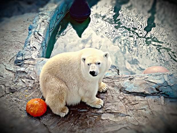 В Екатеринбурге умер белый медведь Умка из-за детской игрушки