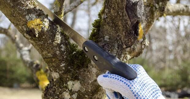 Путем проб и ошибок поняла, как правильно обрезать сад весной