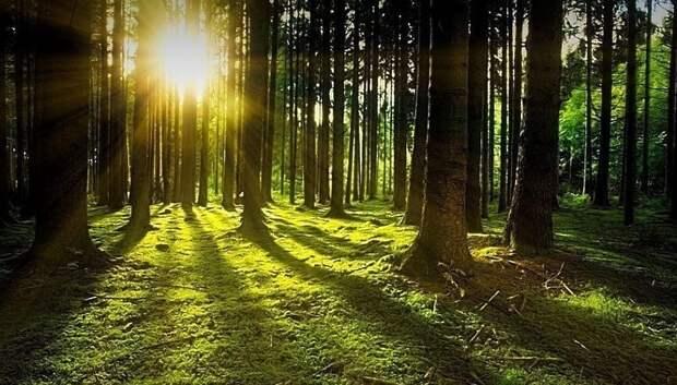 Солнечная погода ожидается в Мытищах в среду