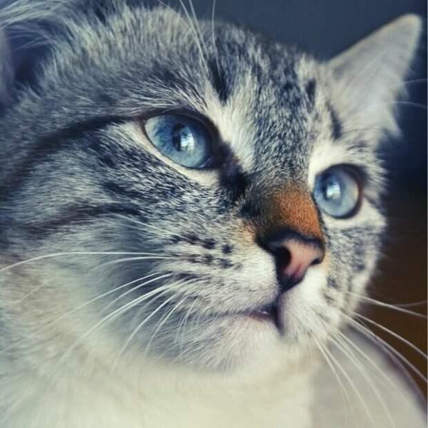 Мы подкармливали котика, а потом он стал нас куда-то звать. Оказалось, он просил помощи для своей старенькой хозяйки