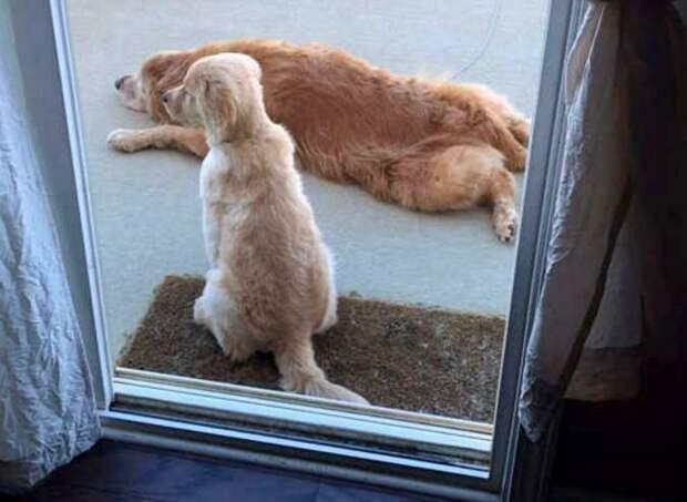 Хоть они такие разные, для них это не имеет значения добро, друзья, животные, зрение, история, милота, собака