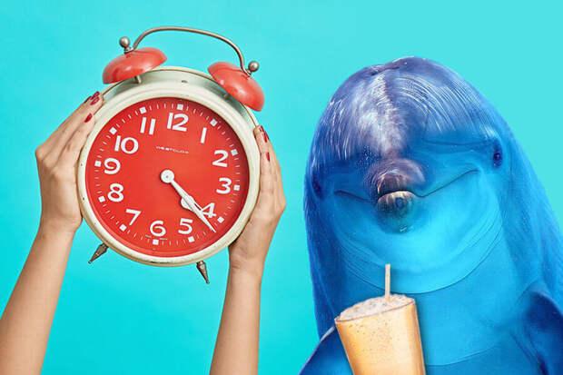 Хотели бы никогда не спать? Лунатизм — уникальная способность дельфинов