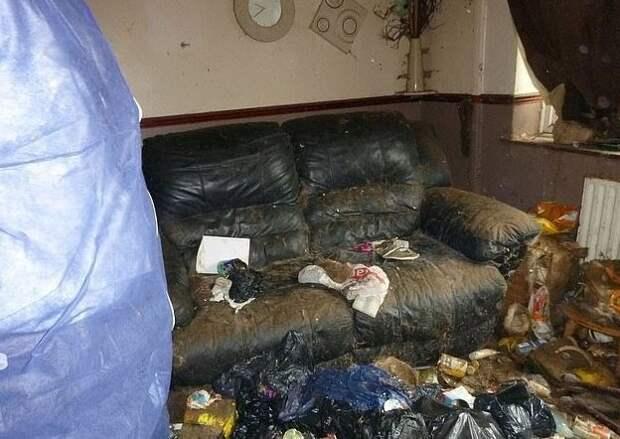 Британской кошатнице запретили пожизненно держать животных, после того как вскрыли ее квартиру Nicola Lissimore, West Midlands, Wolverhampton, животные, закон, кошки, правозащитники