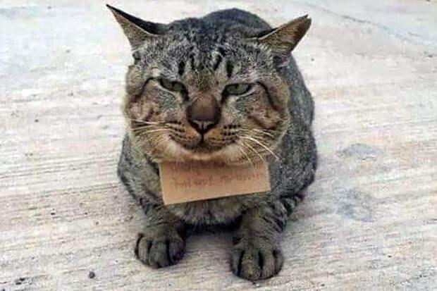 Сбежавший из дома кот открыл кредит в рыбном магазине