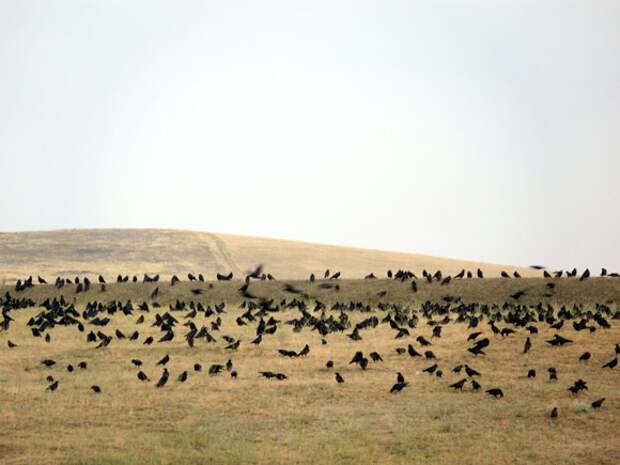 Птицы являются как помощниками, так и вредителями в сельском хозяйстве. С одной стороны они избавляют поля от насекомых, а с другой сами едят посевы.
