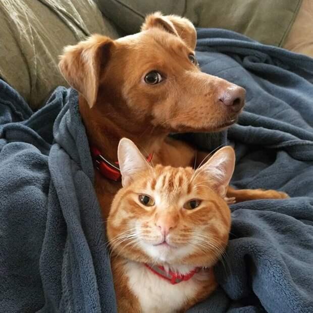 Ой, всё-таки видят! видео, домашний питомец, животные, кот, милота, собака