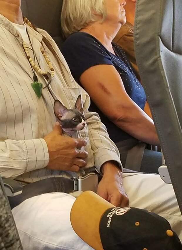 Хозяин, и меня пристегни, пожалуйста! животные, забавно, летайте самолетами, мило, пассажиры, самолет, собаки, хвостатые пассажиры