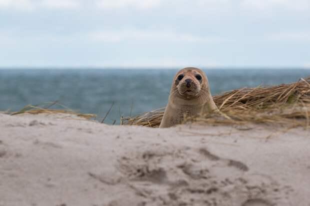 Тюленёнка спасли на берегу Финского залива