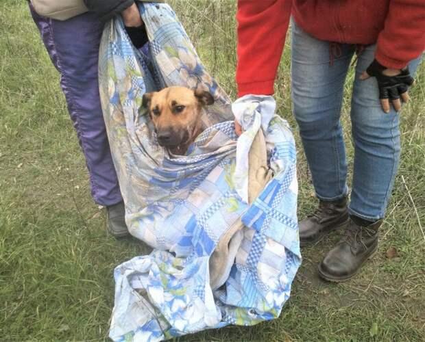 Собаку чудом нашли. Чтобы спасти, тащили с поля на себе