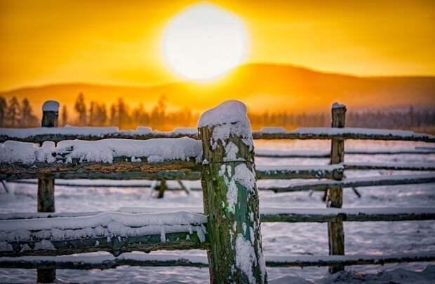 В Якутии лошади живут на открытом воздухе круглый год и пищу ищут самостоятельно Порода, животные, лошадь, россия, саха, фото, якут, якутия