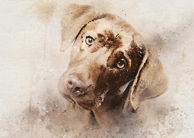Кто сказал «гав»? Как понять язык вашей собаки