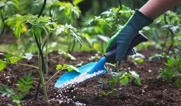 Чем кормить растения? Три питательных вещества, необходимые растениям для роста
