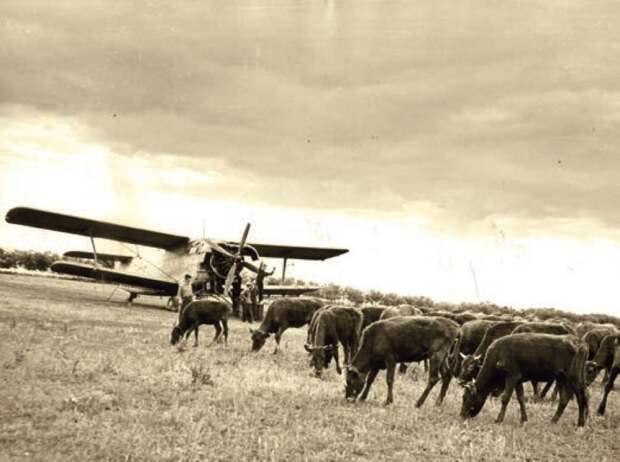 самолет ан-2, легкий самолет, кукурузник
