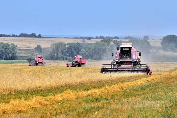 С полей Удмуртии собрали весь урожай хлеба