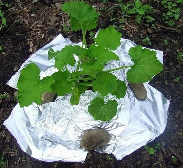 Отличная помощь для растений. /Фото: avatars.mds.yandex.net