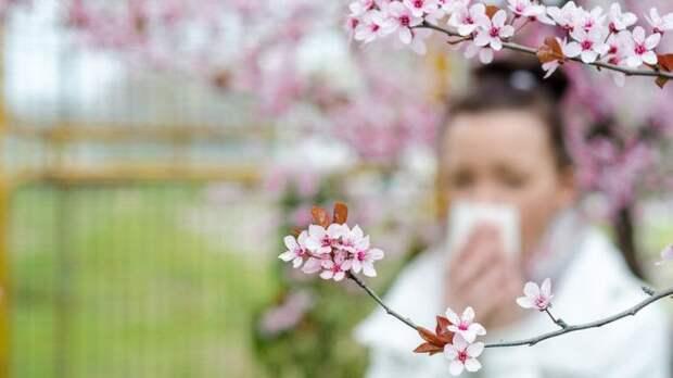 Самолечение сезонной аллергии может вызвать побочные эффекты