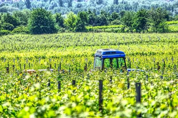 Минприроды: глобальное потепление сделает Север «ярко сельскохозяйственным»