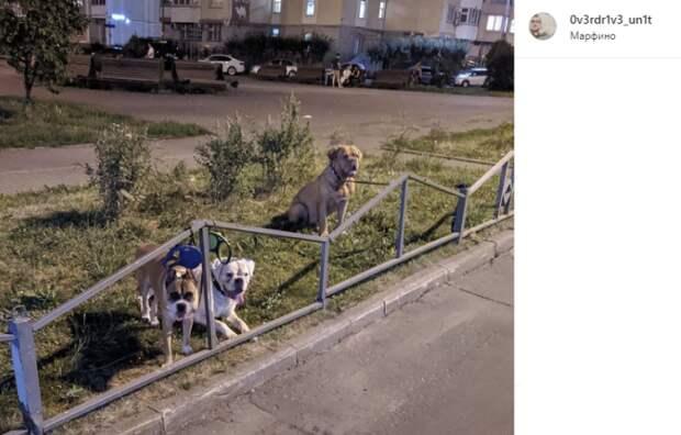 Фото дня: Кашенкин Луг под охраной собак