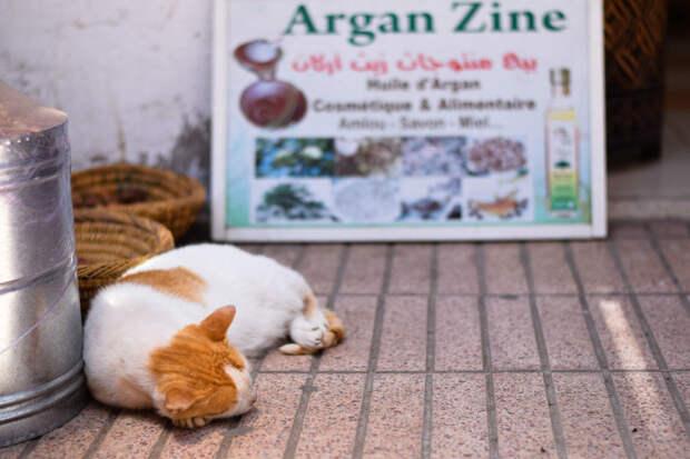Сиеста Эс-Сувейра, город, животные, кот, марокко, проект, фотограф