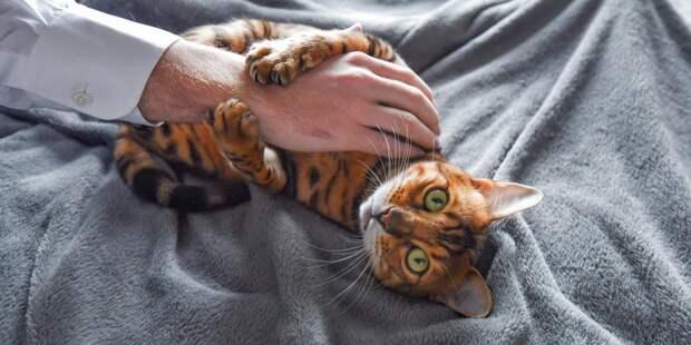 Роспотребнадзор: профилактические меры в отношении домашних или диких зверей пока преждевременны